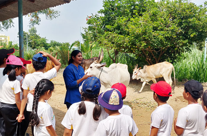 Real Life Moments - Cow FarmTeaching